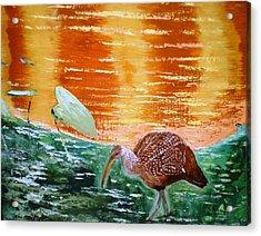 Crane Hunting Minnows Acrylic Print by Francis Roberts ll