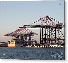 Cranes 2 Acrylic Print