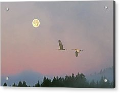 Acrylic Print featuring the photograph Cranes And A Full Moon At Dawn by Peggy Collins