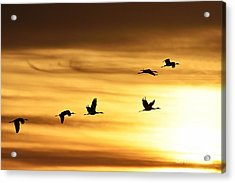 Acrylic Print featuring the photograph Cranes At Sunrise 2 by Larry Ricker
