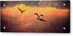 Cranes Lifting Into The Sky Acrylic Print
