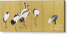 Cranes Acrylic Print by Maruyama Okyo