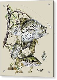Crappie And Bass Acrylic Print