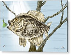 Crappie Time - 2 Acrylic Print