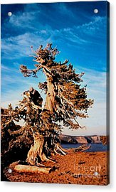 Crater Lake Winds Acrylic Print by Diane E Berry
