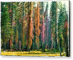 Crayon Forest Acrylic Print by Michael Cleere
