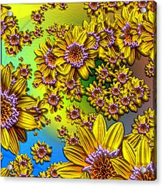 Crazy Daisies Acrylic Print by Nick Kloepping