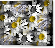 Crazy Daisys Acrylic Print by Karen Lewis