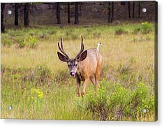 Crazy Tongue   Acrylic Print by James Marvin Phelps