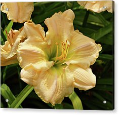 Acrylic Print featuring the photograph Cream Daylily by Sandy Keeton