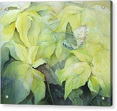 Cream Poinsettia With Butterfly Acrylic Print by Karen Armitage