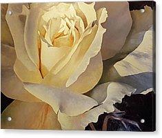 Creamy Rose Acrylic Print