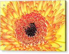 Creation Of A Masterpiece Acrylic Print by Pierre Leclerc Photography