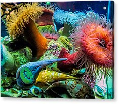 Creatures Of The Aquarium Acrylic Print