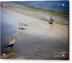 Creatures Of The Gulf - Which Way Acrylic Print by Lucyna A M Green
