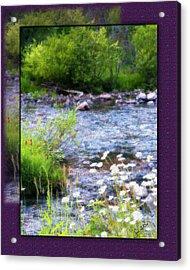 Acrylic Print featuring the photograph Creek Daisys by Susan Kinney