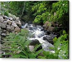 Creek Acrylic Print by Reb Frost
