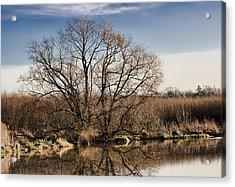 Creek Tree Acrylic Print by Leif Sohlman