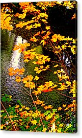 Acrylic Print featuring the photograph Creekside Colors by Lynn Bawden