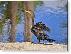 Creekside Cormorant Acrylic Print