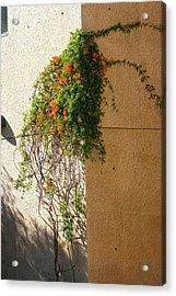 Creeping Plants Acrylic Print