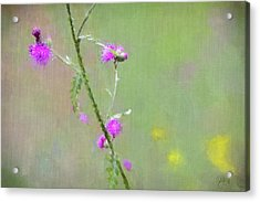 Creeping Thistle Acrylic Print