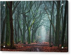 Creepy Forest Acrylic Print by Martin Podt