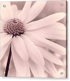 Creme Fraiche With Hint Of Pink Acrylic Print