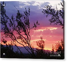 Acrylic Print featuring the photograph Creosote Sky by Suzette Kallen