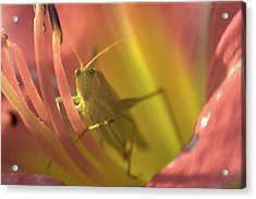 Acrylic Print featuring the photograph Cricket Portrait 1 by Brian Hale