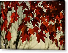 Acrylic Print featuring the photograph Crimson Red Autumn Leaves by Chris Berry