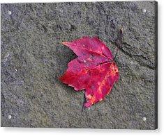 Crimson Acrylic Print by JAMART Photography