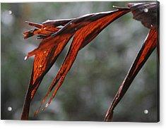 Crimson Leaf In The Amazon Rainforest Acrylic Print