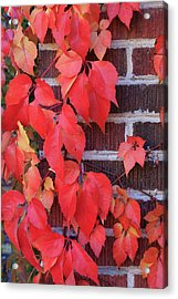 Crimson Leaves Acrylic Print