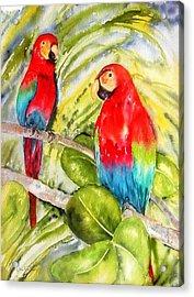 Crimson Macaws Acrylic Print