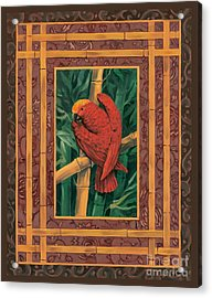 Crimson Parrot Acrylic Print by Paul Brent