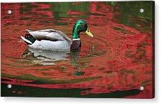 Acrylic Print featuring the photograph Crimson Reflections by Elvira Butler