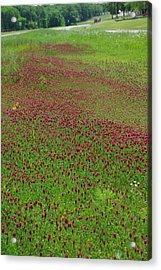 Crimson Tide Acrylic Print