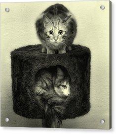 Crise Du Logement Acrylic Print by Claire Jean