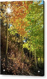 Acrylic Print featuring the photograph Crisp by David Chandler