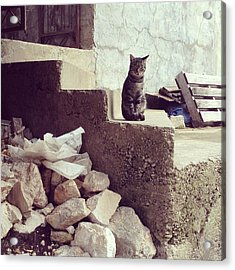 Croatian Cat Acrylic Print