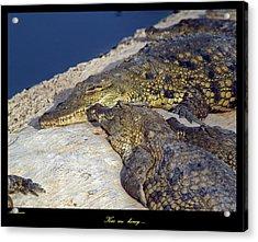 Crocodile Acrylic Print