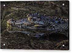 Crocodile Reflections Acrylic Print by Martin Newman