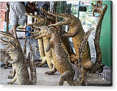 Crocodiles Rock  Acrylic Print