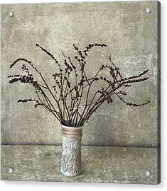 Crocosmia Seed Pods Acrylic Print by Carol Leigh