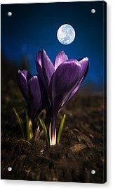 Crocus Moon Acrylic Print