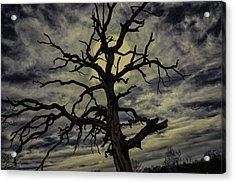Crooked Sky Acrylic Print by David Longstreath