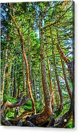 Crooked Trees Of Mt Roberts Acrylic Print