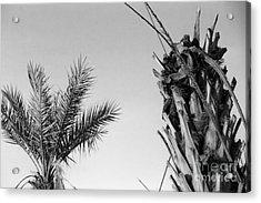 Crop Top Palm Acrylic Print