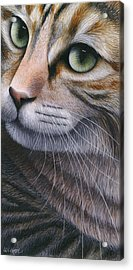 Cropped Cat 2 Acrylic Print by Carol Wilson